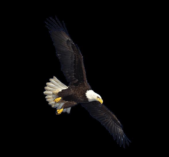 Eagle clipart eagle flying. Us transparent png stickpng