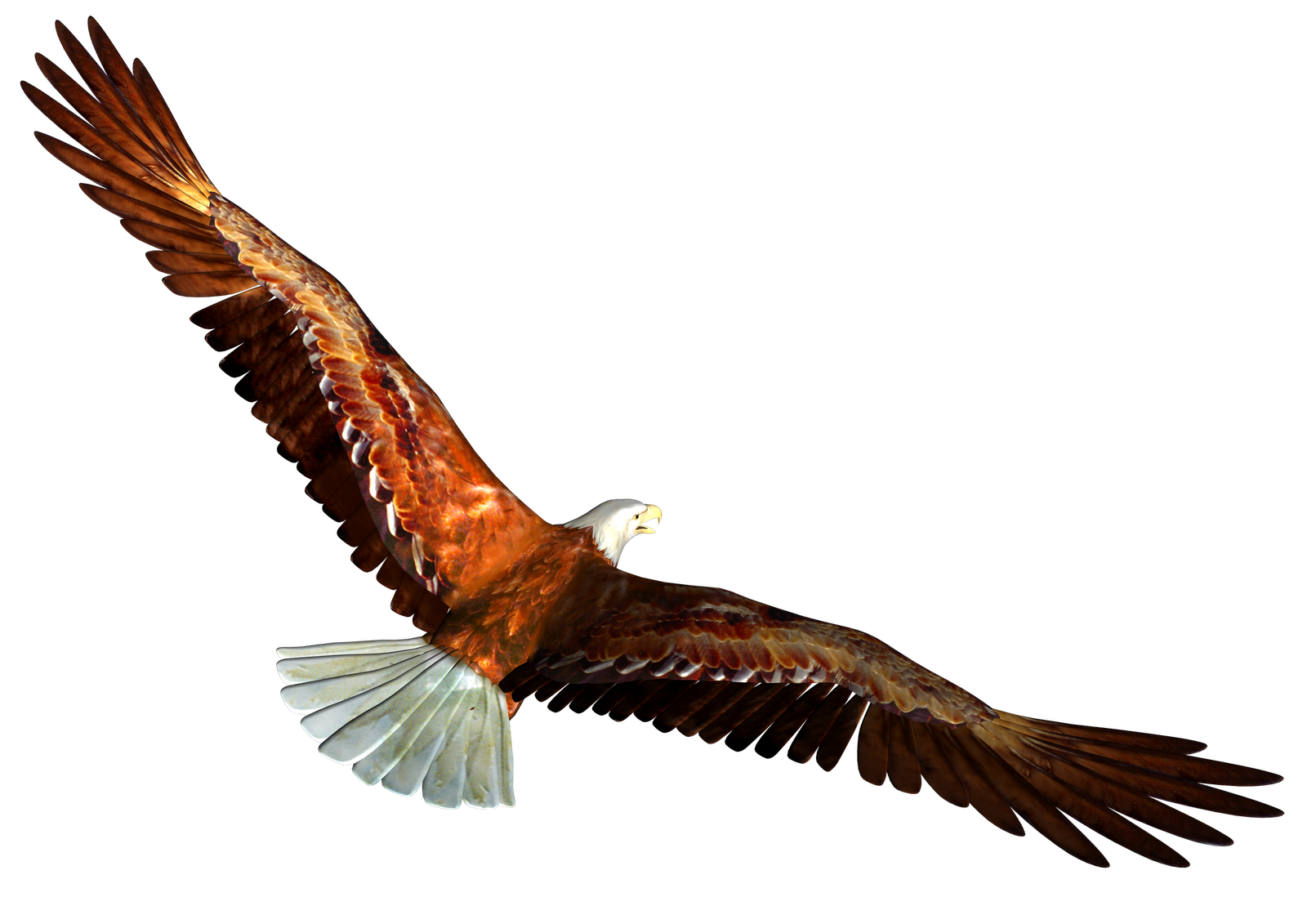 Eagles eight isolated stock. Eagle clipart superhero