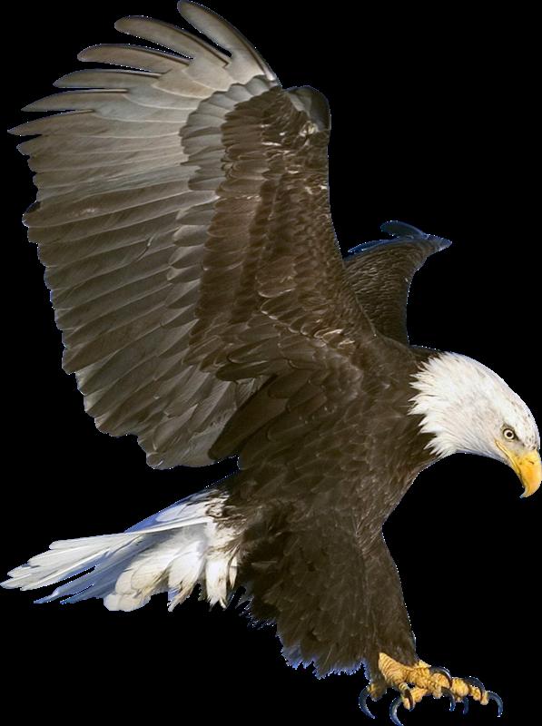 Eagles biker