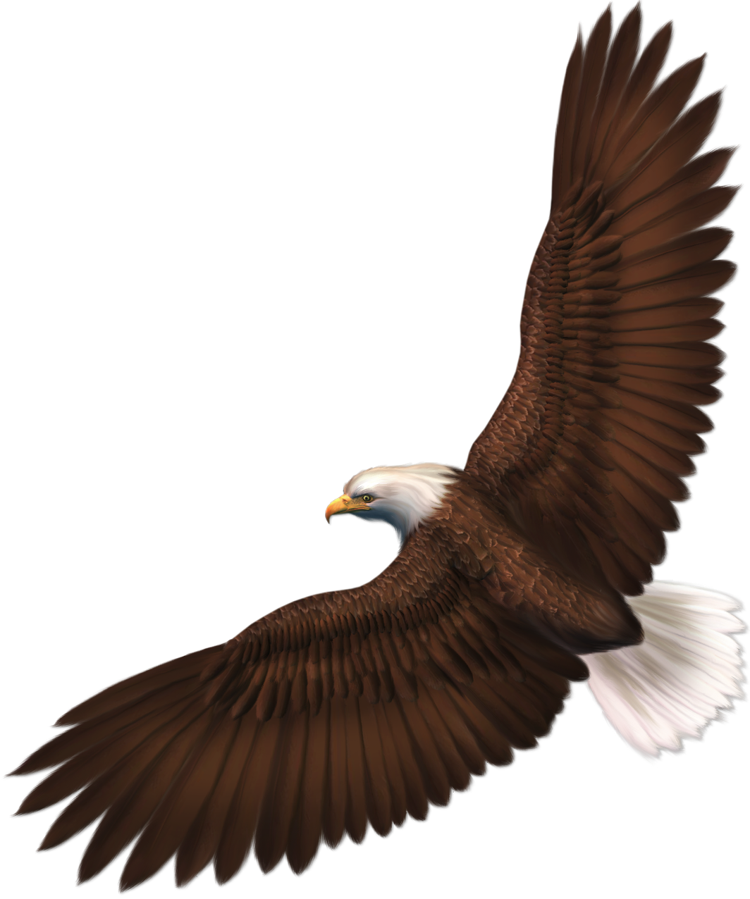 Transparent png picture gallery. Snake clipart eagle