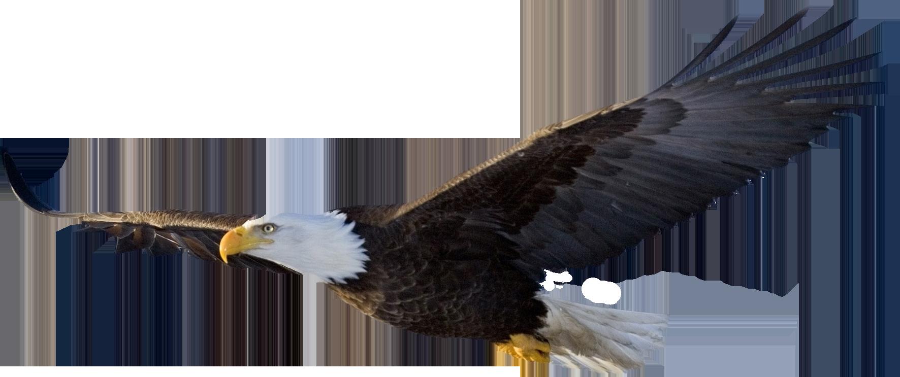 Bald flying png image. Eagles clipart dead eagle