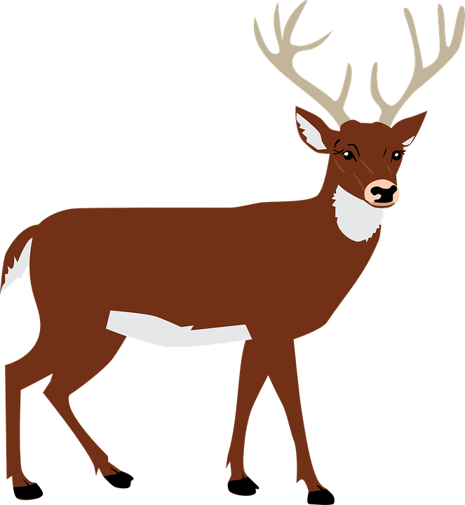 Free image on pixabay. Hunting clipart black tailed deer