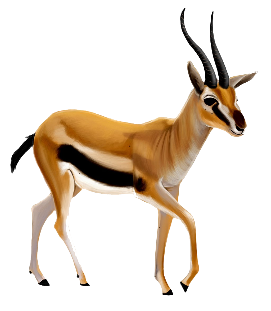 Hunting clipart gazelle.  collection of high
