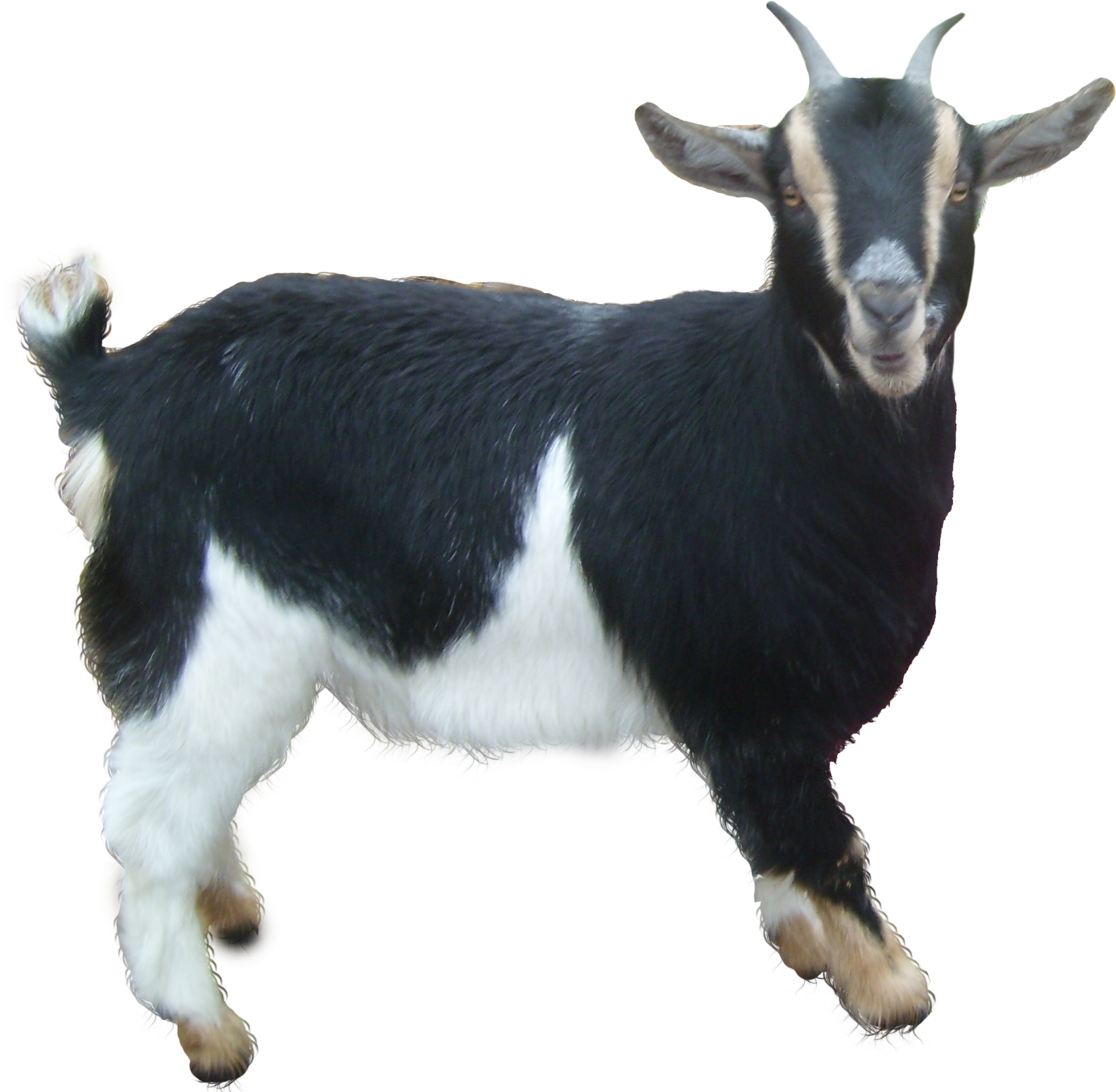 Icon web icons png. Goat clipart male goat