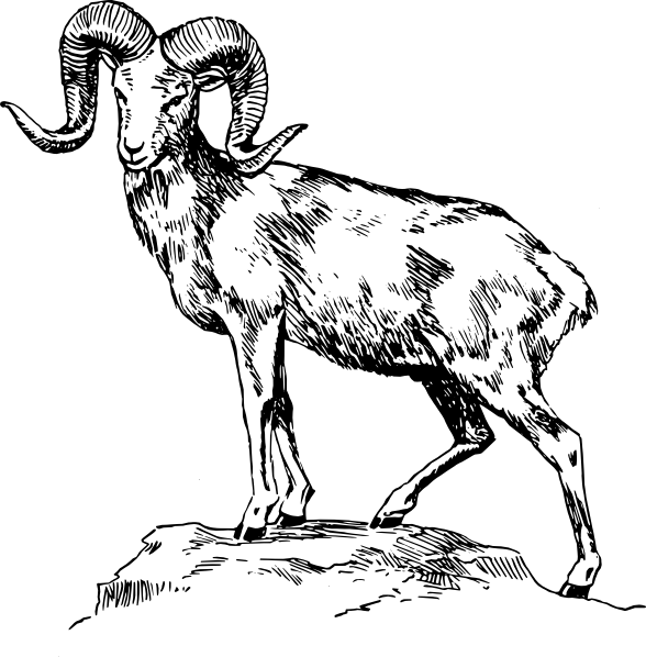 Ram animal drawing at. Outline clipart goat