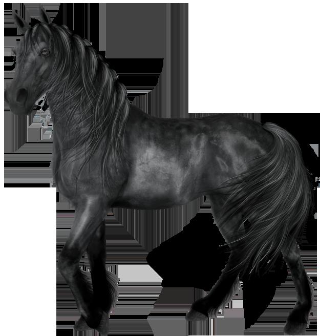 Transparent black gallery yopriceville. Frames clipart horse