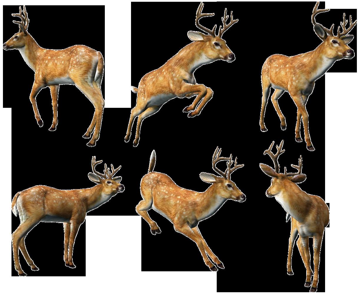 Hunting clipart sambar deer.  animals png pop