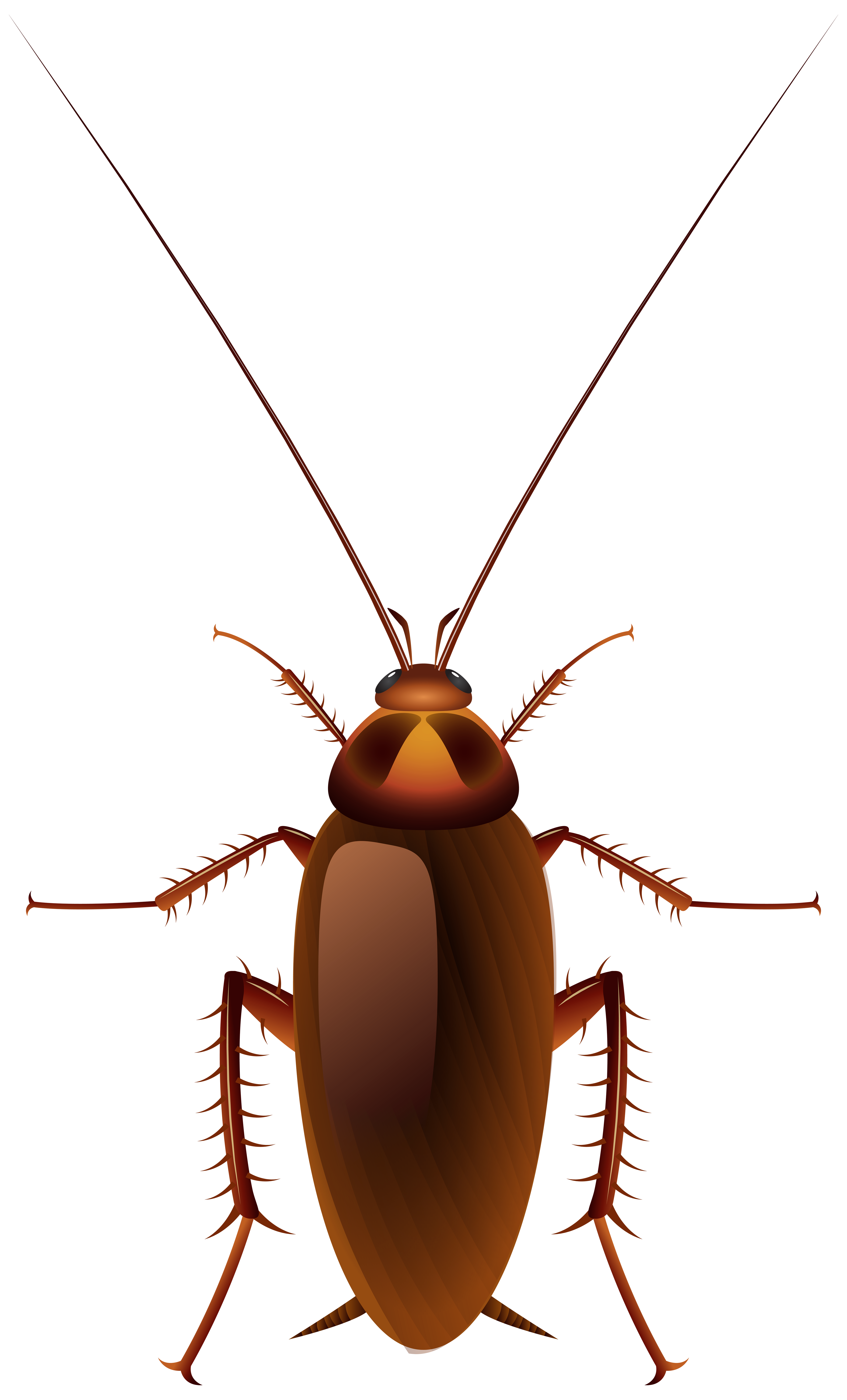 Short clipart insect. Cockroach png clip art