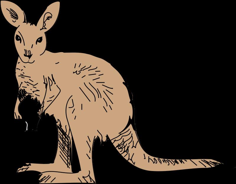 Hug clipart kangaroo. Animal pictures free org