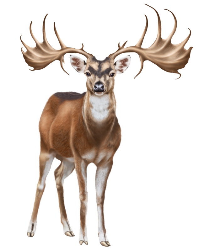 Moose clipart game wild.  png animals clip