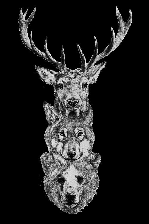 Clipart animals lobo. Deer wolf bear ciervo