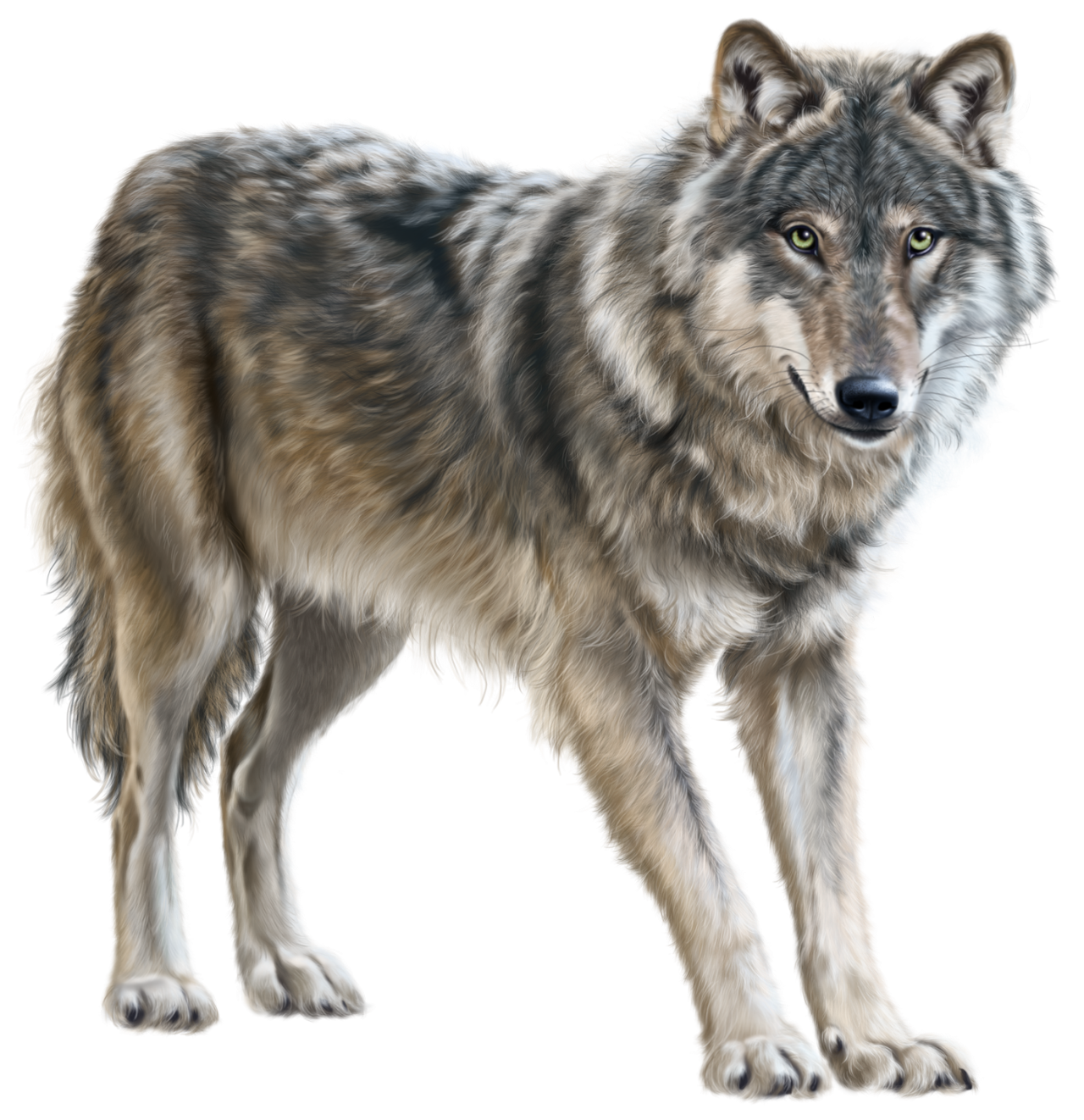 Woodland clipart wolf. Png clip art animal