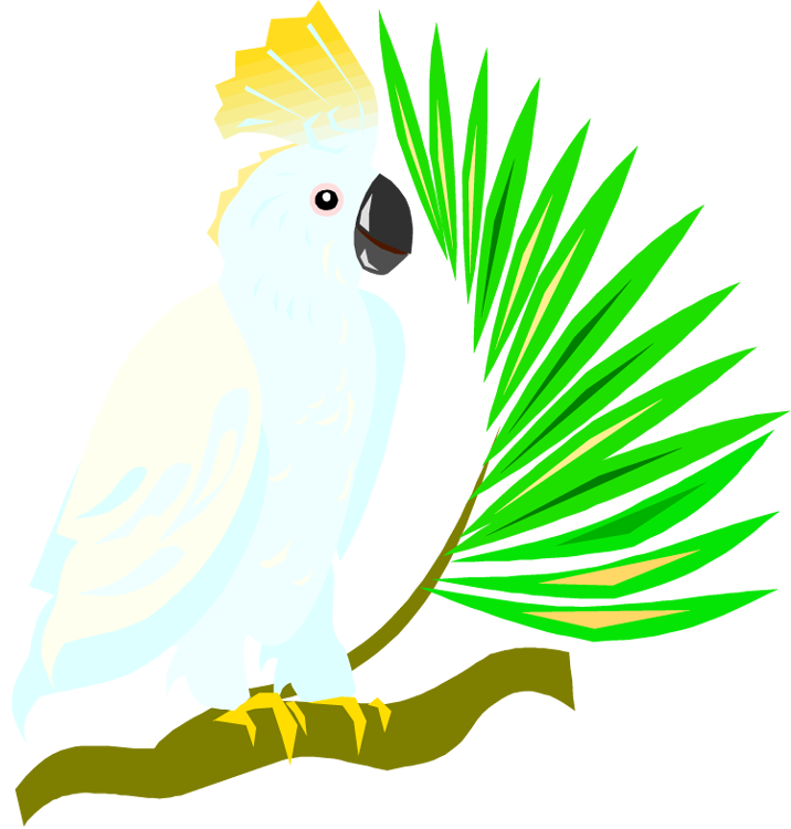 Free and macaw. Parrot clipart branch clipart