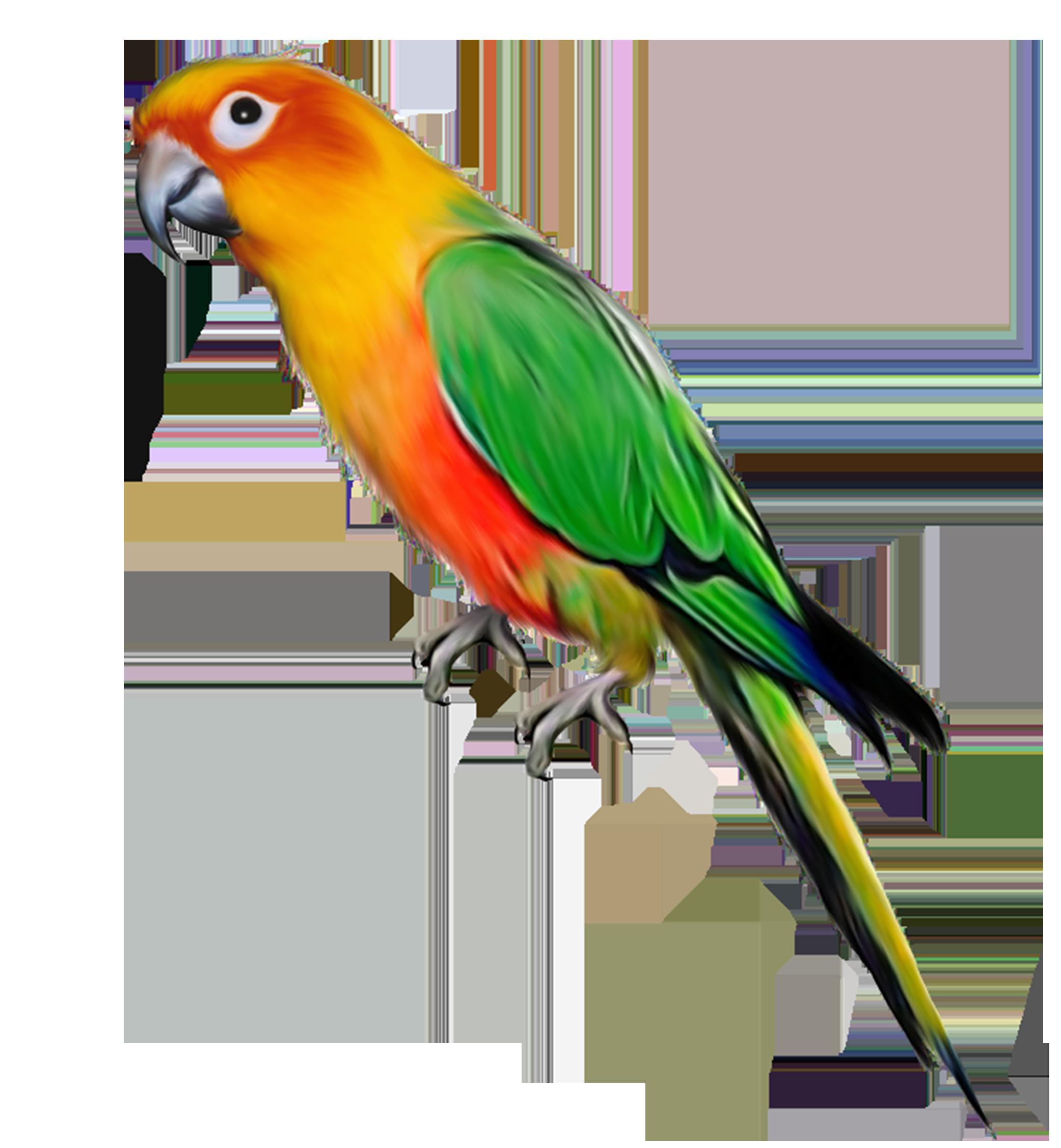 Parrot clipart budgie. Bird clip art color