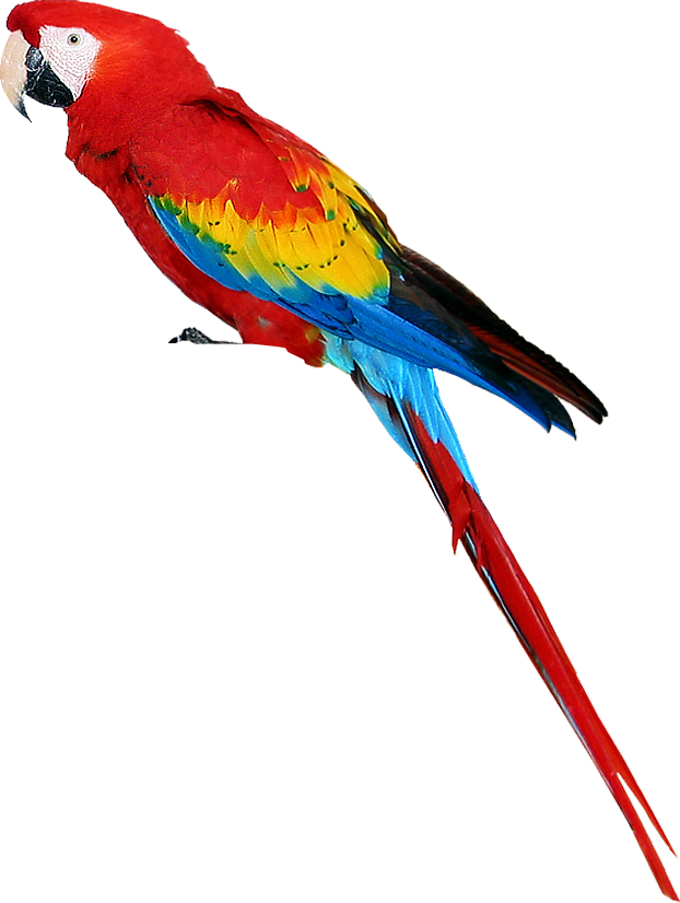Colorful parrot PNG