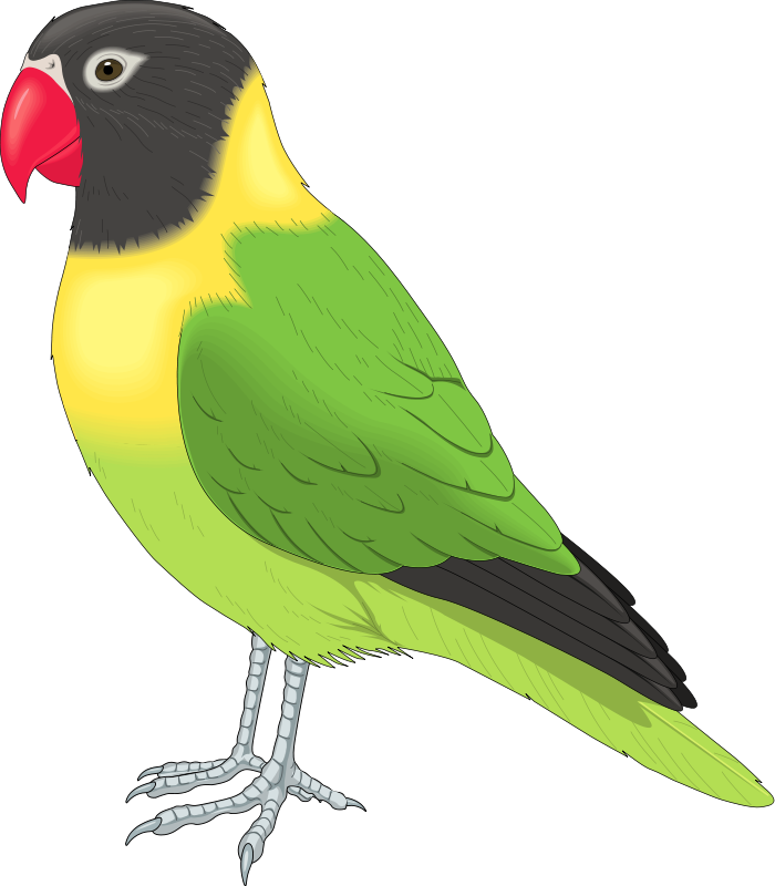 Free clip art animals. Pet clipart canary