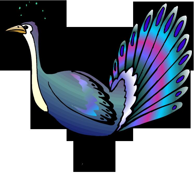 peacock clipart female peacock