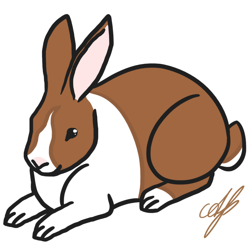 Pet clipart rabbit. Dutch by avajes on