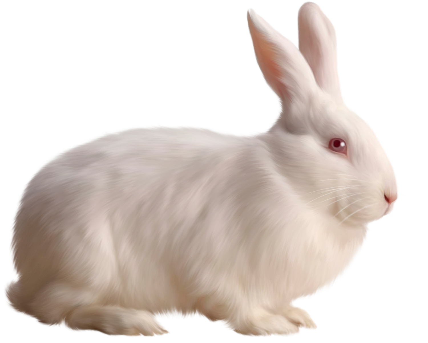 Free gallery yopriceville high. Clipart ear white rabbit