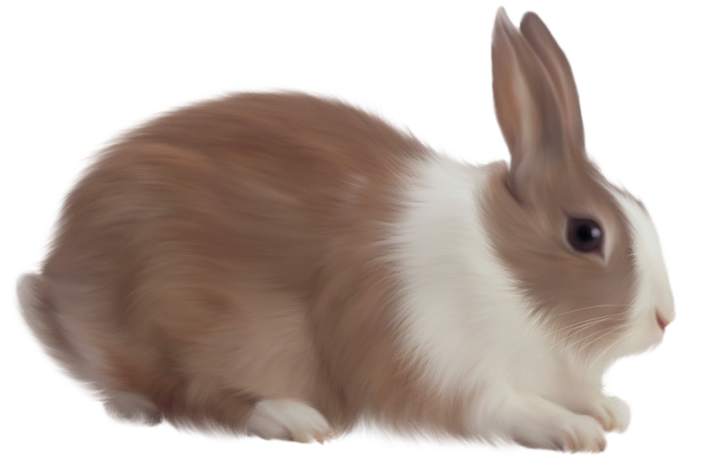 Skeleton rabbit