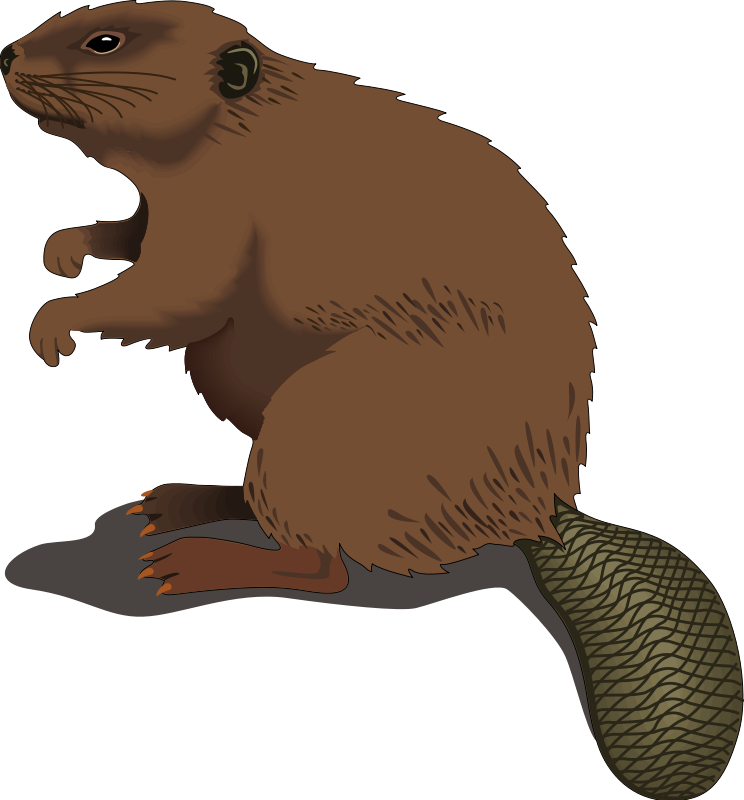 Jy rainforest biome by. Groundhog clipart winter