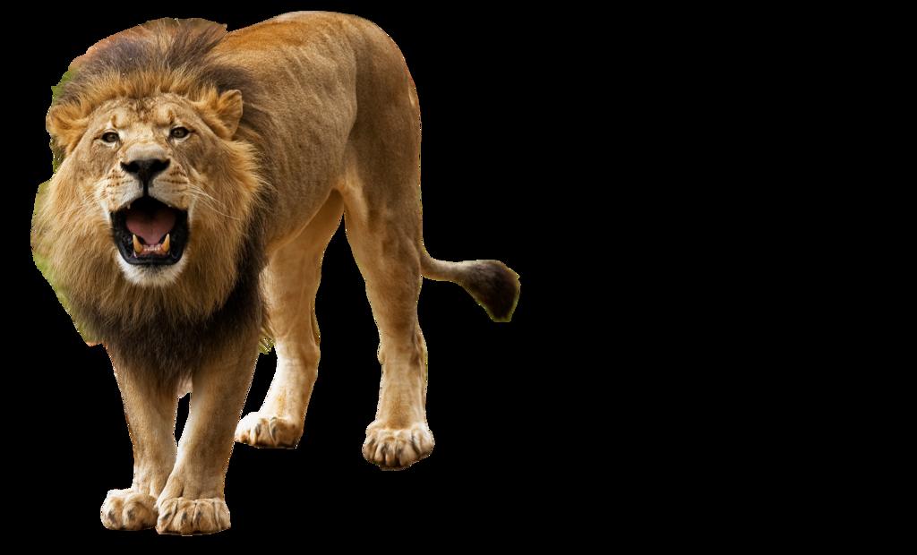 Clipart png lion. Animals that run transparent