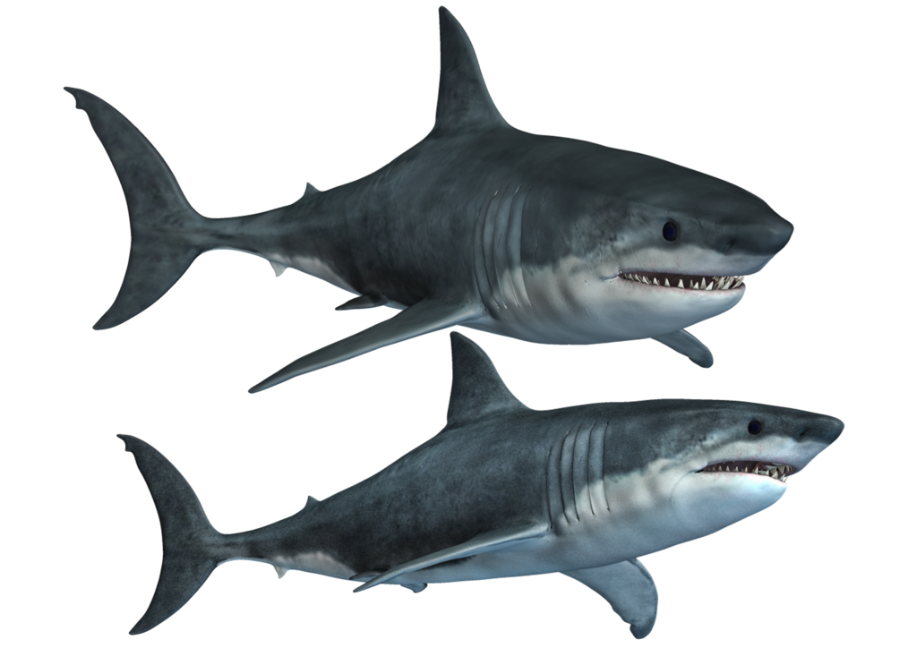 Water clipart shark. At getdrawings com free