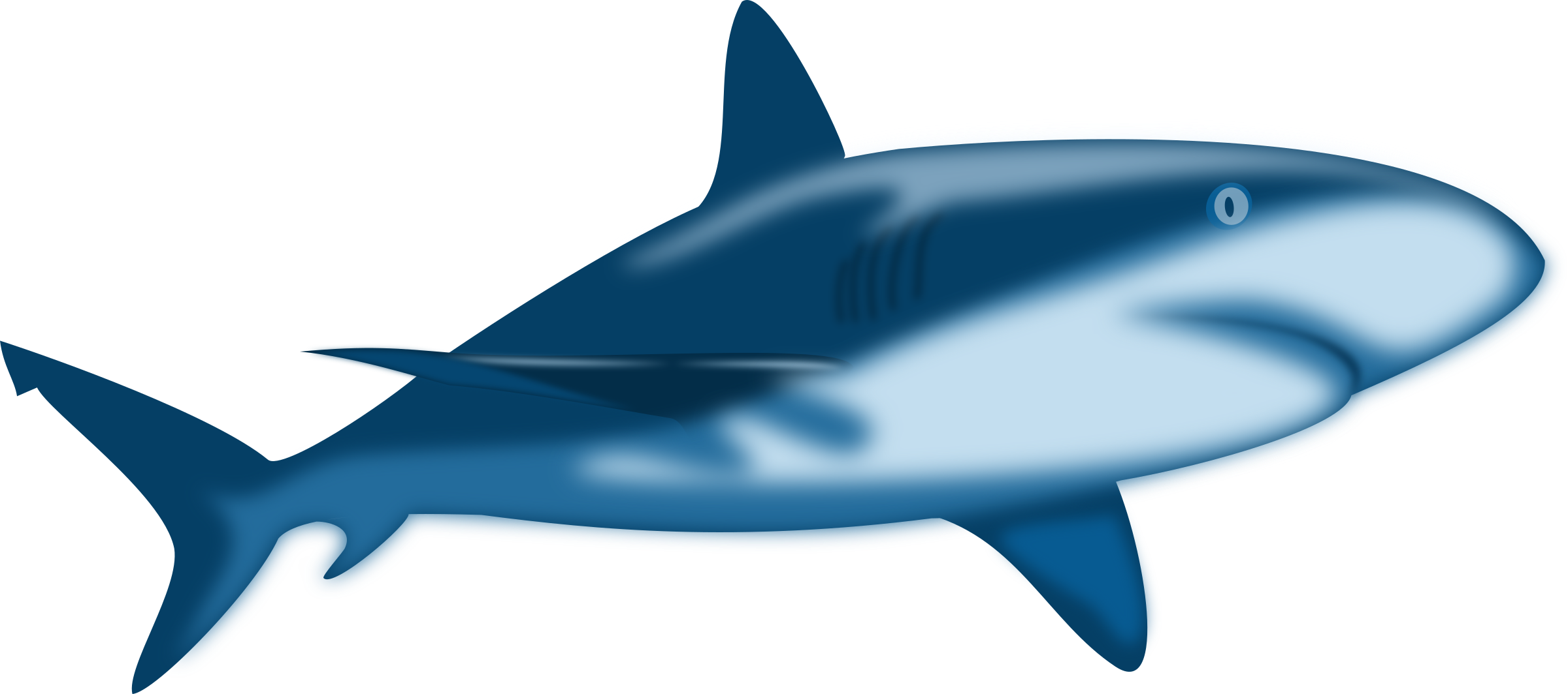 Water clipart shark. Nurse at getdrawings com