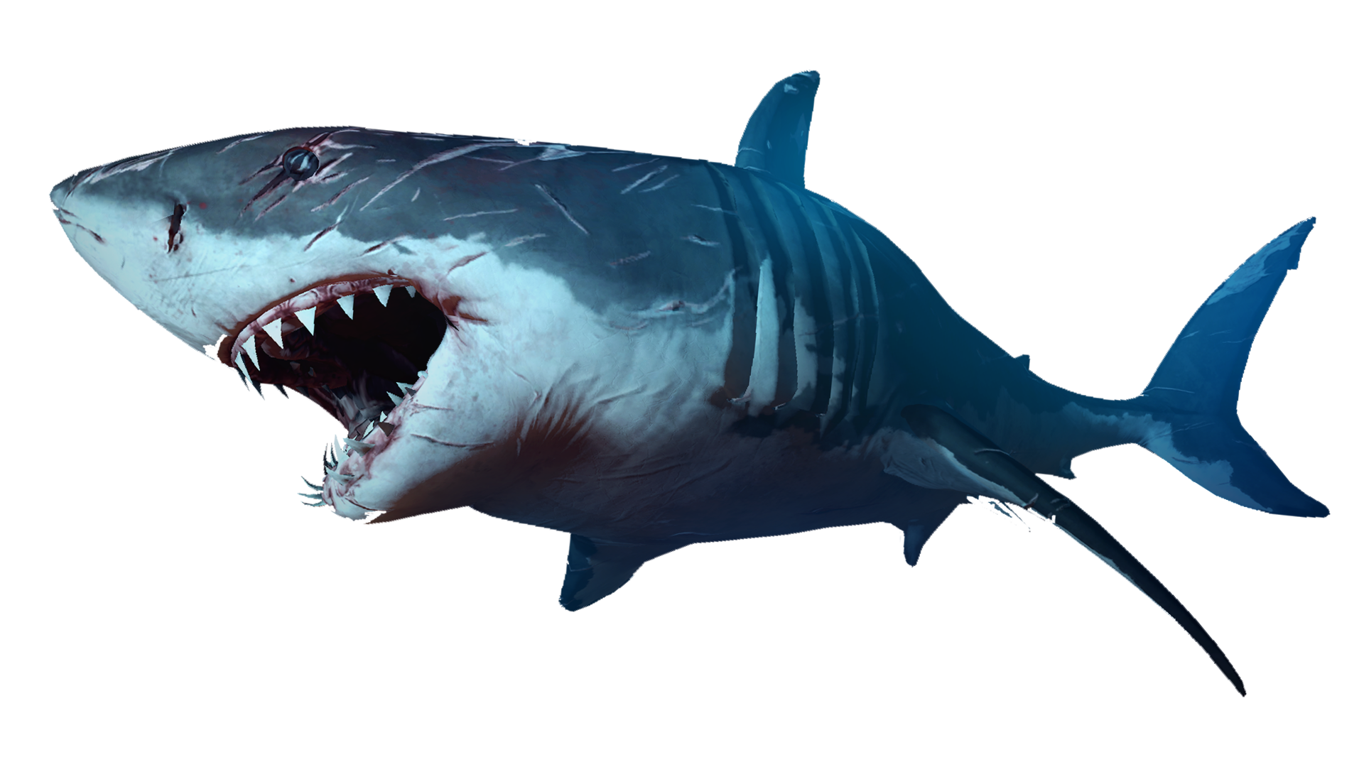 Orange clipart shark. Pin by arkhael greed