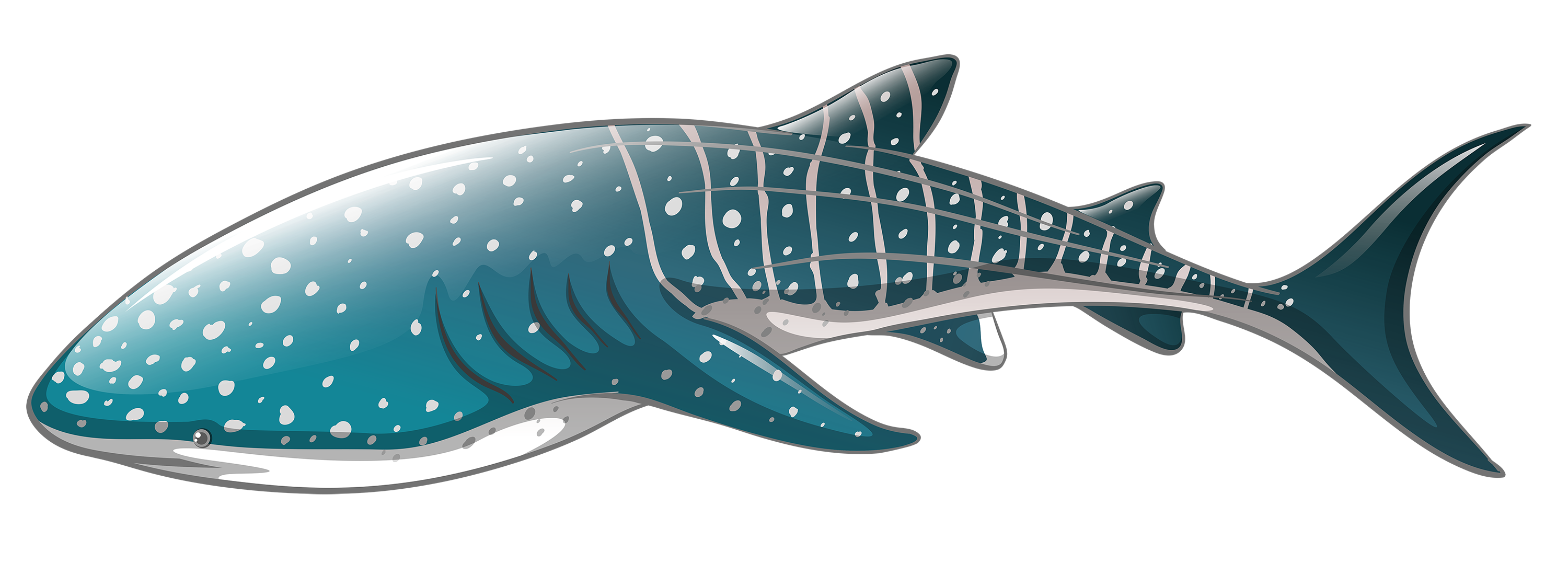 Whale png best web. Pink clipart shark