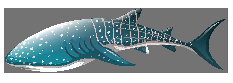 Whale png best web. Clipart shark nice shark
