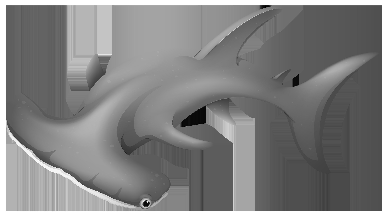 Clipart shark underwater. Hammerheadshark png best web