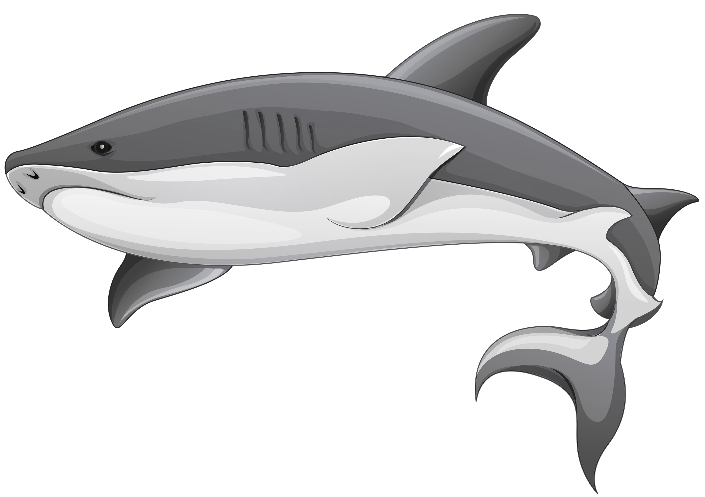 Grey shark png best. Dolphin clipart vector