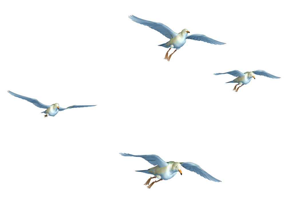 Flying birds png stock. Fly clipart flew