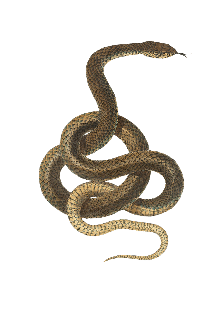 Snake clipart brown snake. Green plastic art transparent
