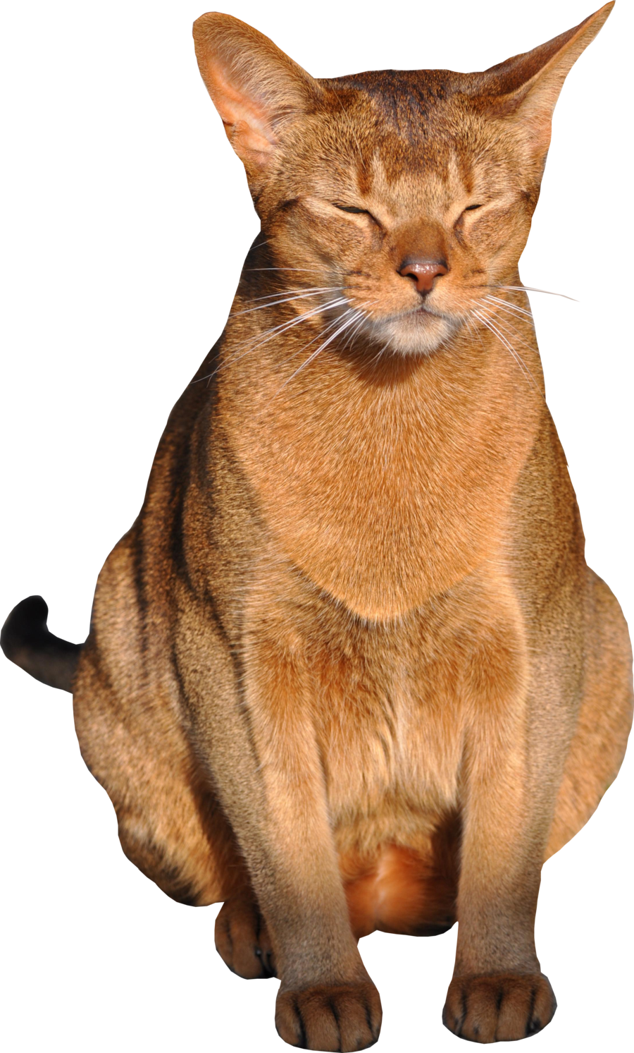Png with by meinlilapark. Clipart cat transparent background