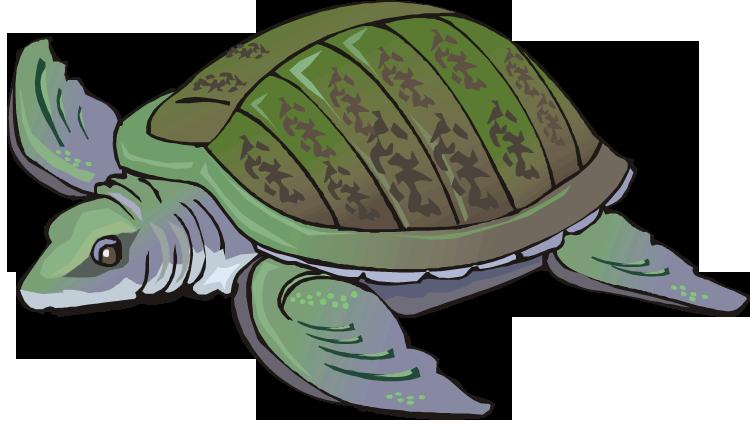Free swimming. Fish clipart turtle