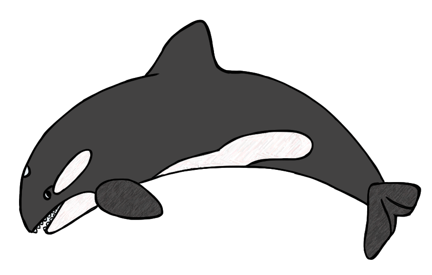 Killer black and white. Free clipart whale