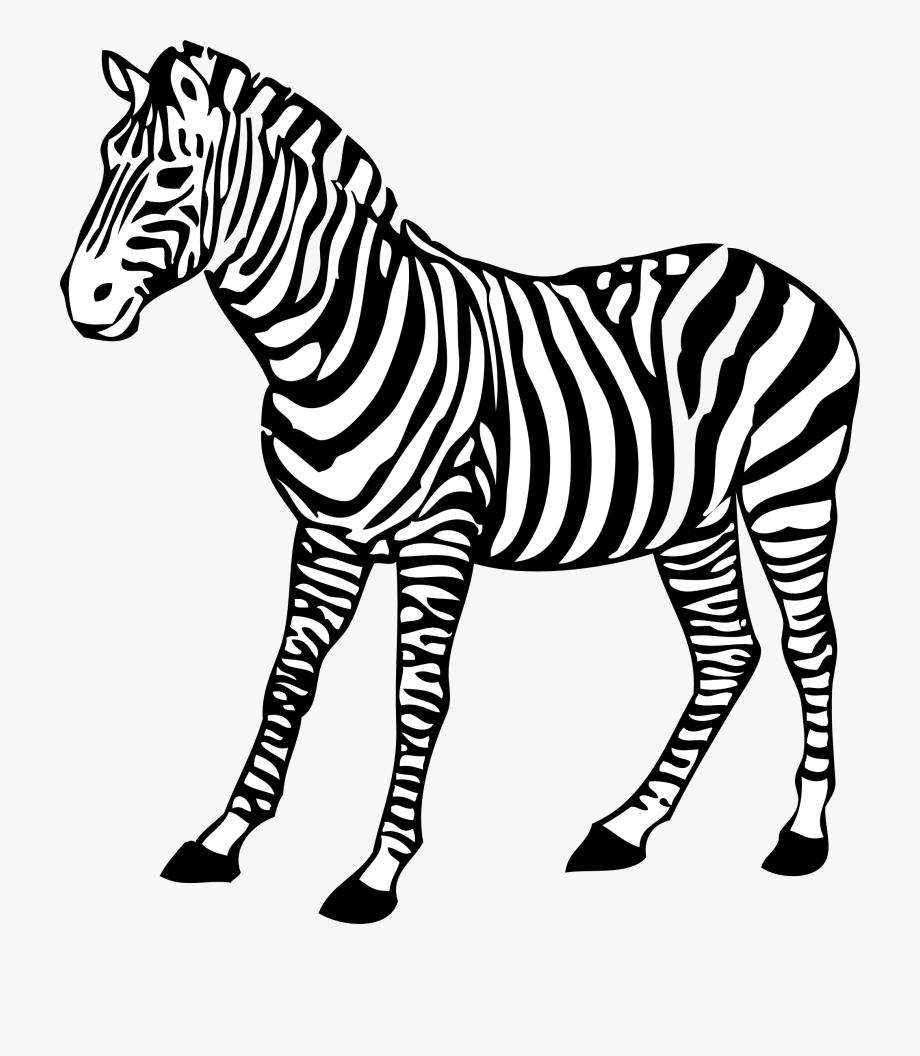 Clipart zebra pichers. Animal black and white