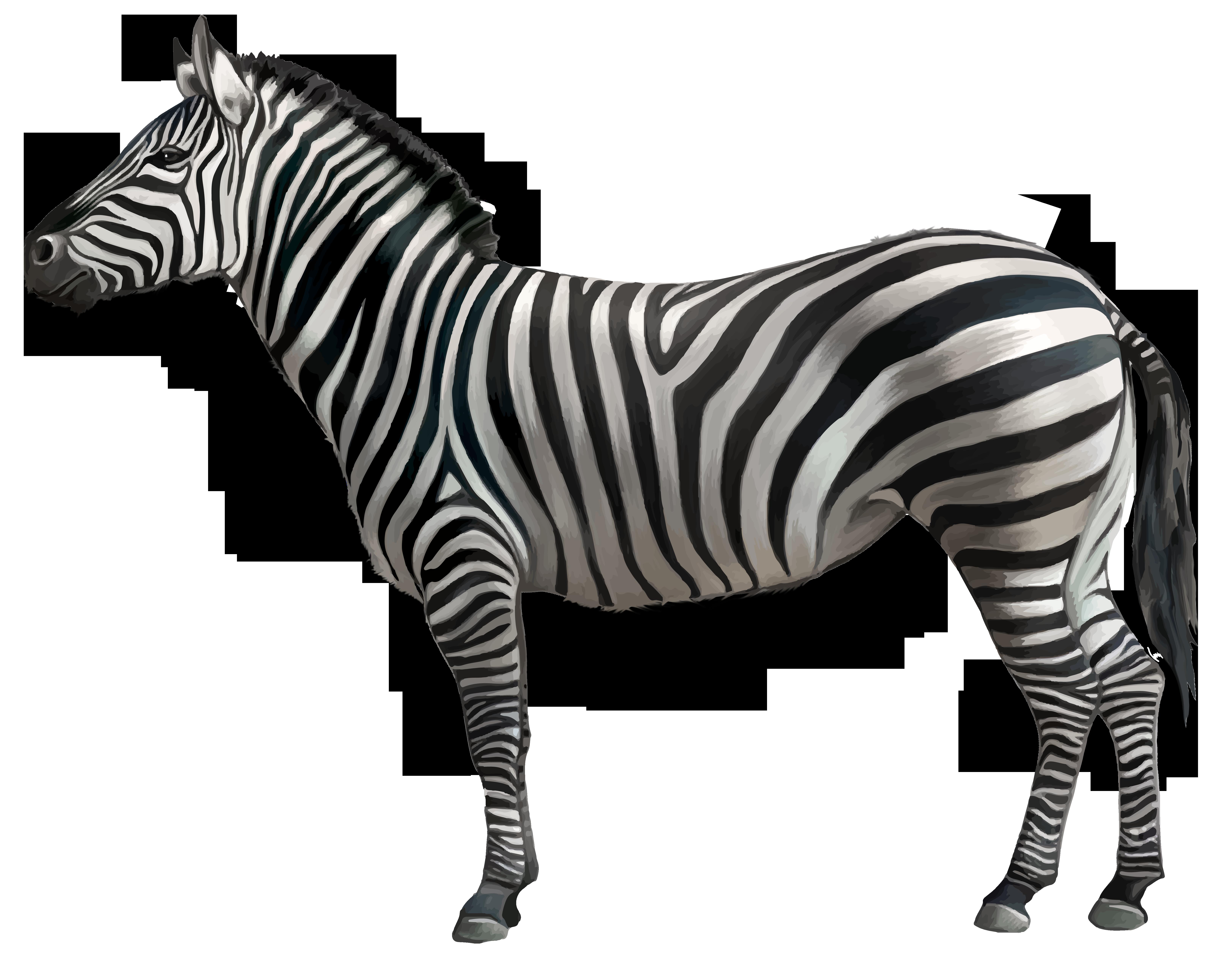 Clipart zebra zebra stripe. Png image gallery yopriceville