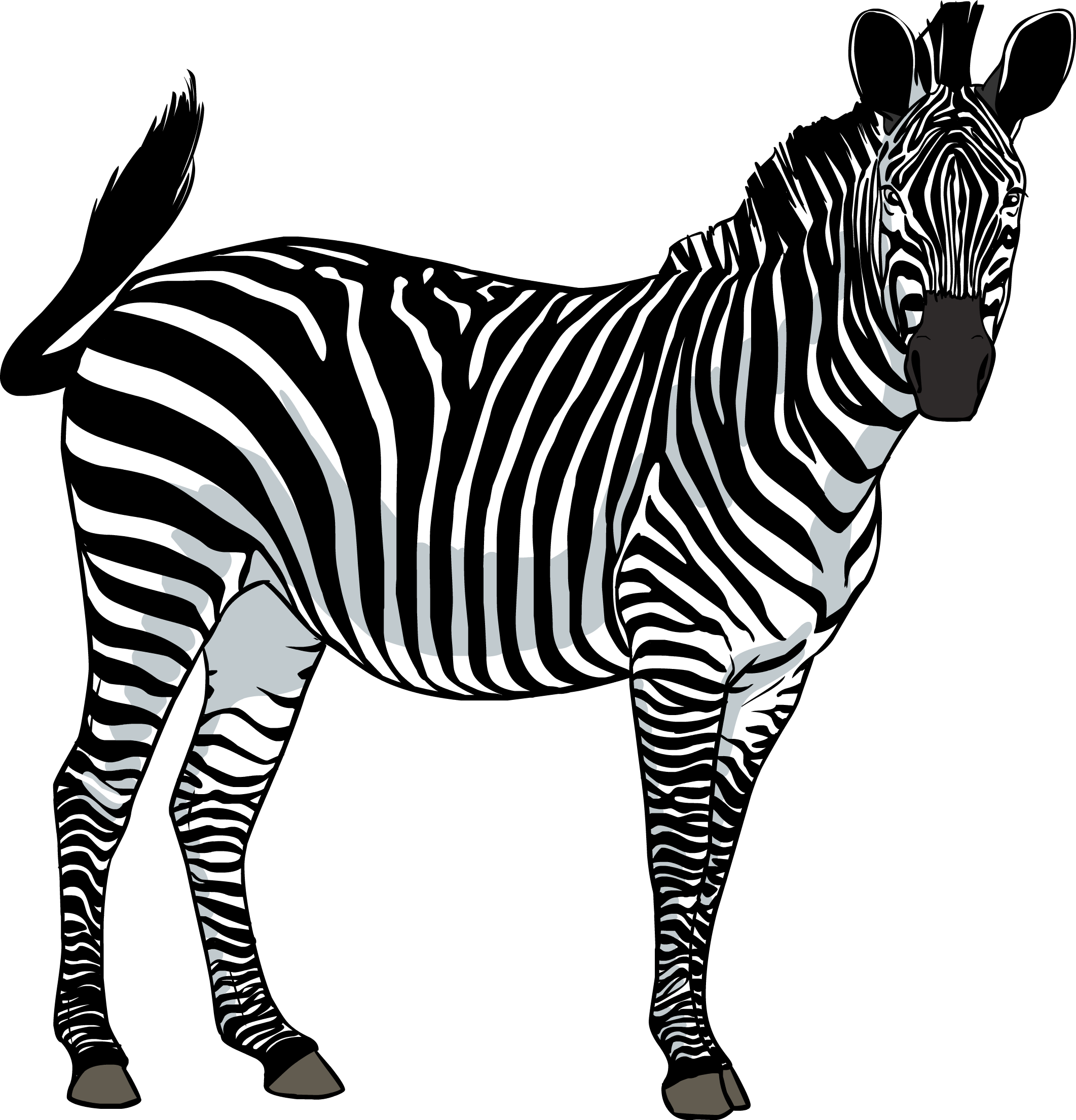 Transparent free images only. Clipart png zebra