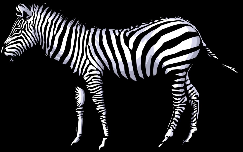 Clipart zebra zebra stripe. African horse vector image