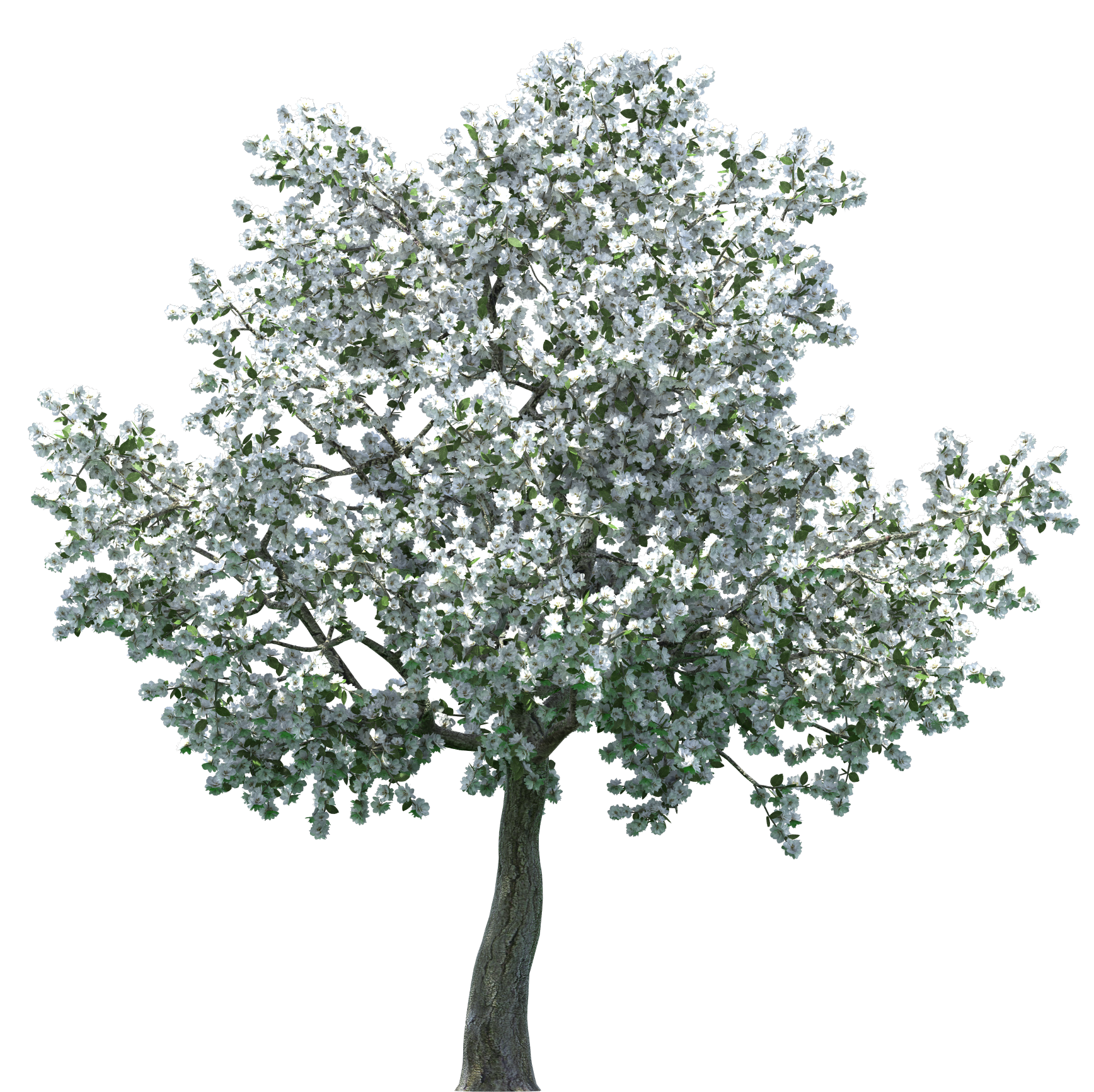 Clipart road tree. Realistic blossom png clip