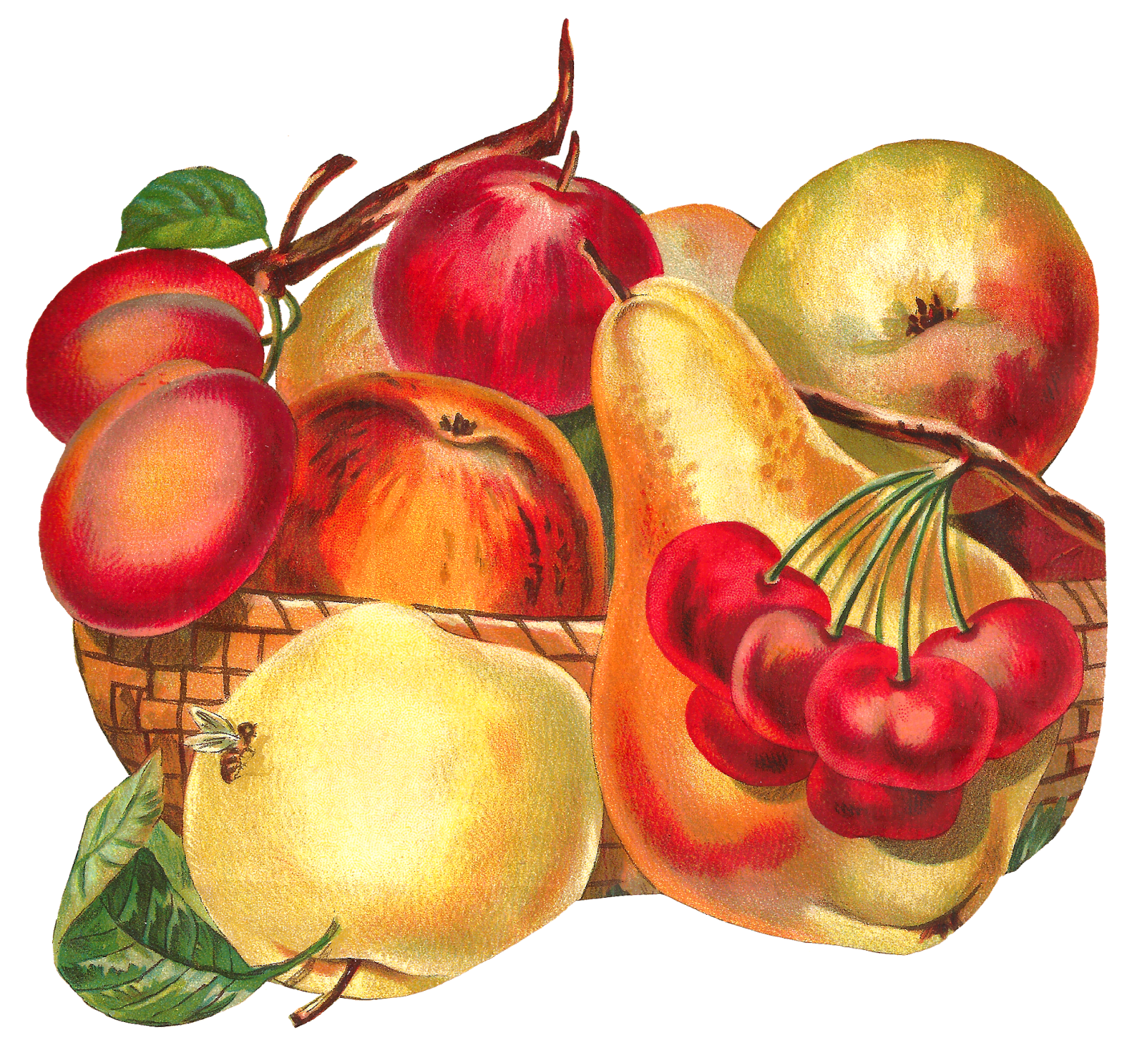 Basket image apple pear. Hat clipart fruit