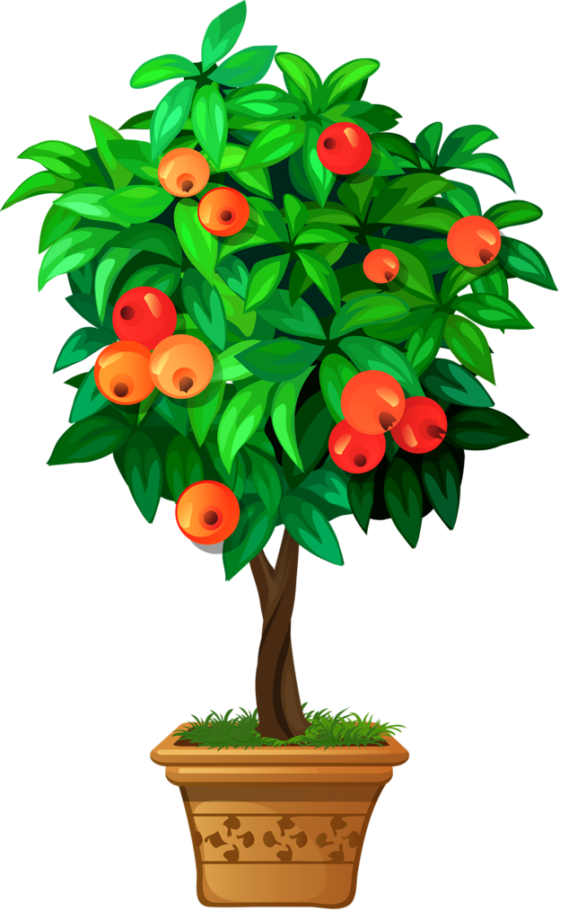 Clipart roses apple tree.  png pinterest clip