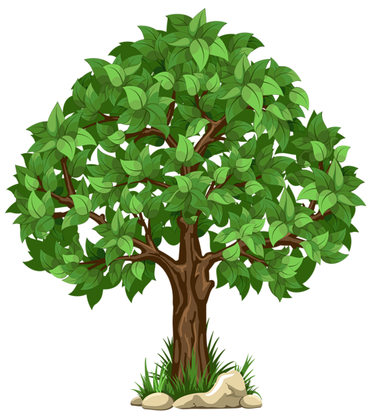 Clipart trees high resolution. Transparent tree png picture