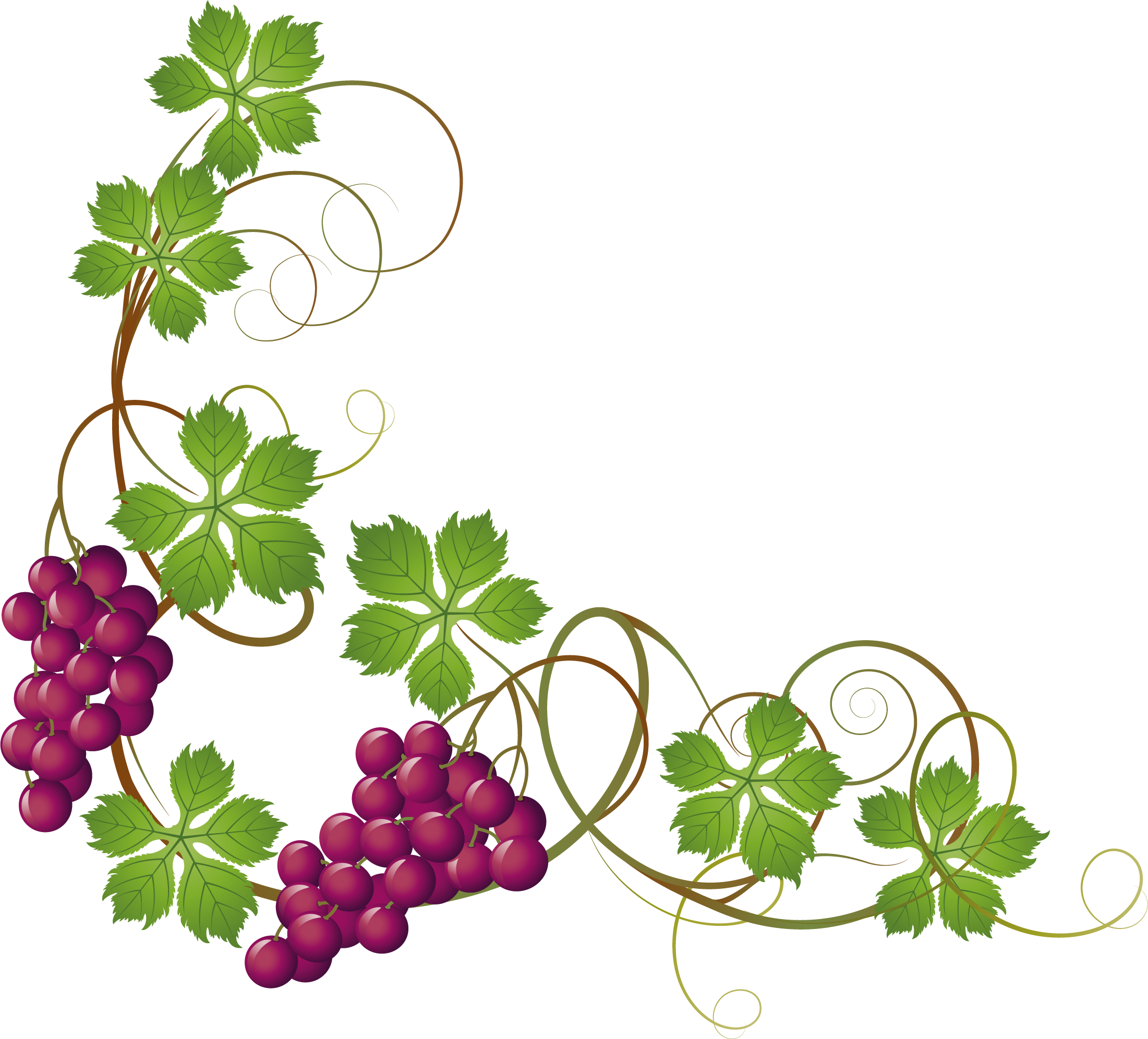 Grape vine at getdrawings. Vines clipart purple flower