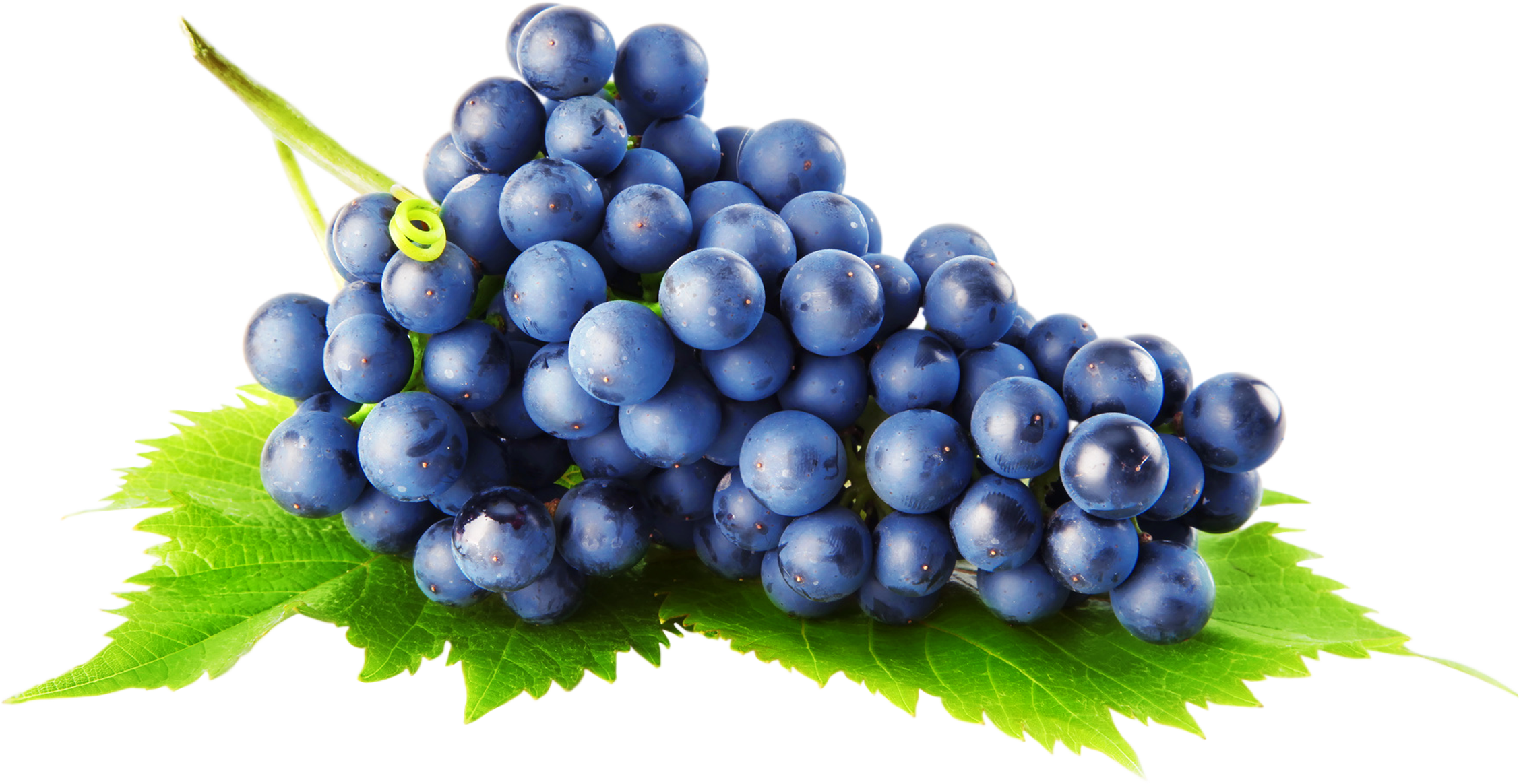 Grape forty seven isolated. Grapes clipart health food