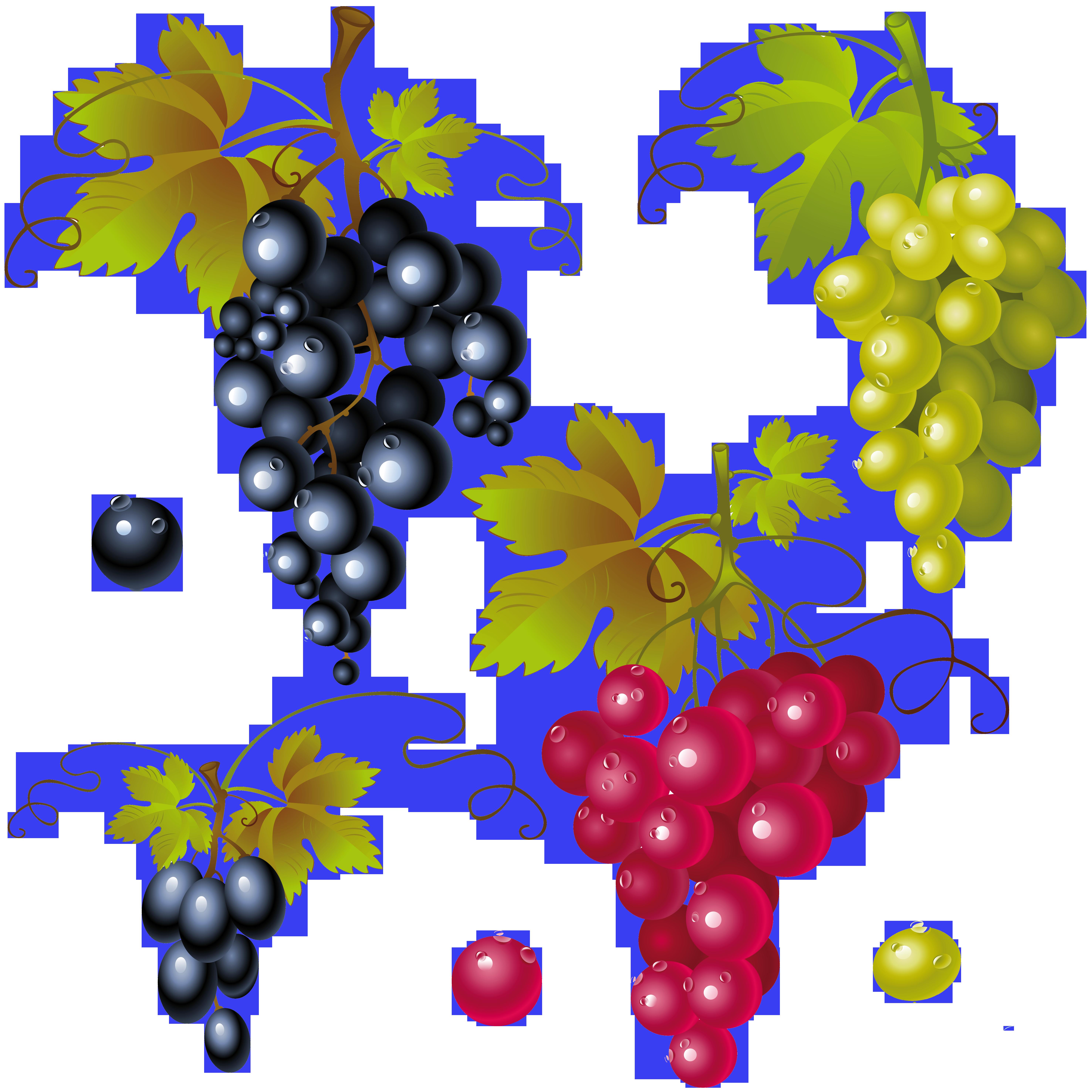 Grapes clipart illustration.  af aeaf c