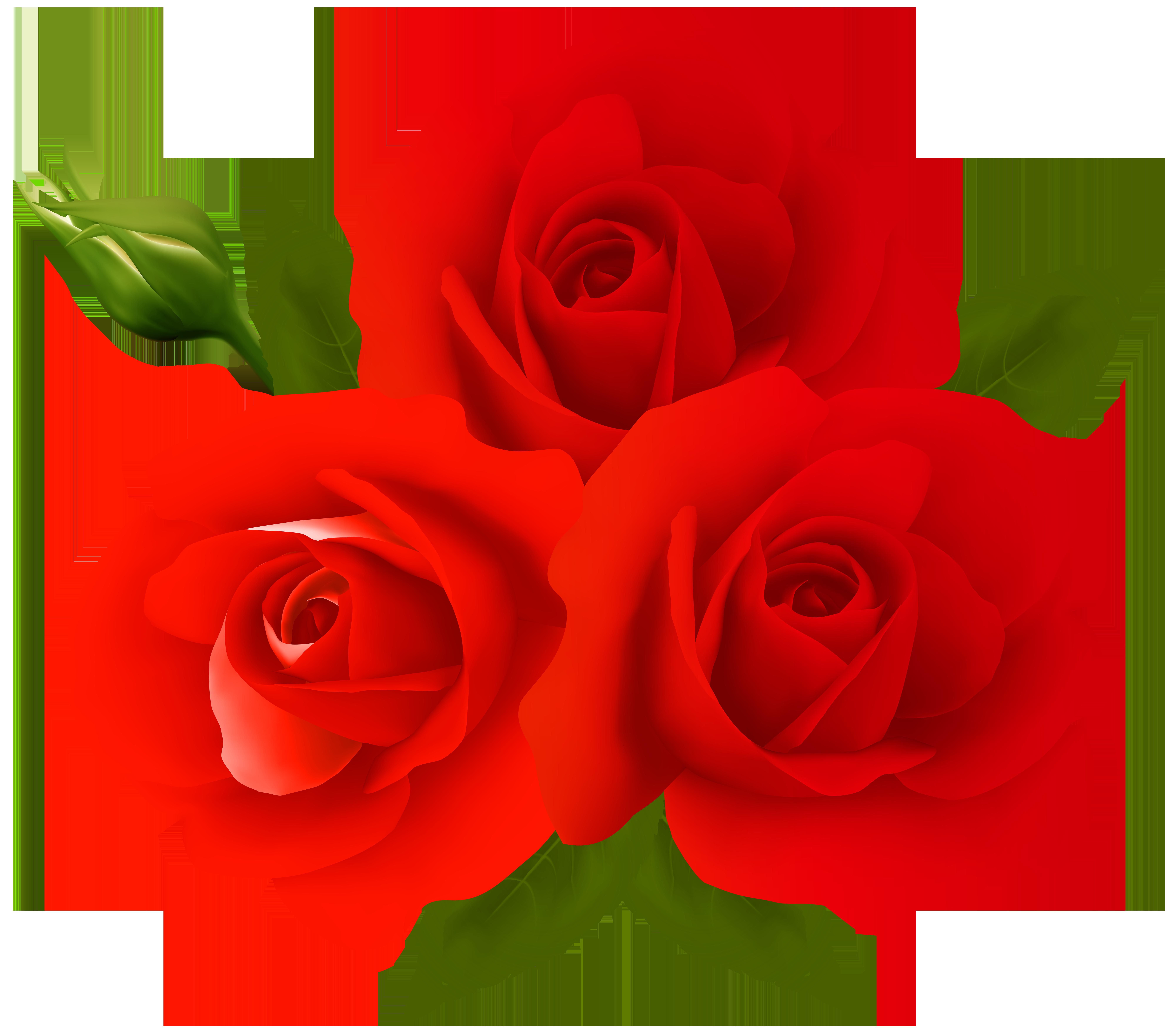 Garden roses centifolia clip. Pear clipart rose